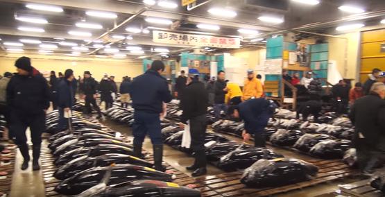 早朝の築地市場 寿司店の裏話 海外の反応