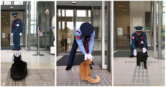 collage-cat-musrum