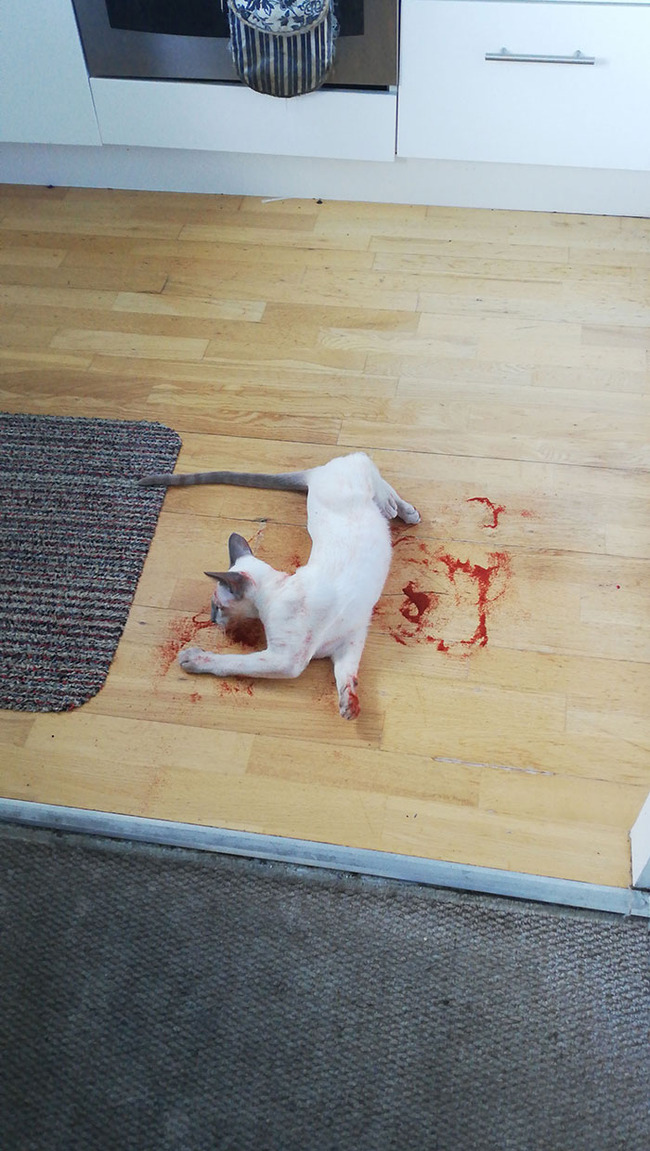pets-almost-gave-owners-heart-attack-2-5f7d630f5d8ce__700
