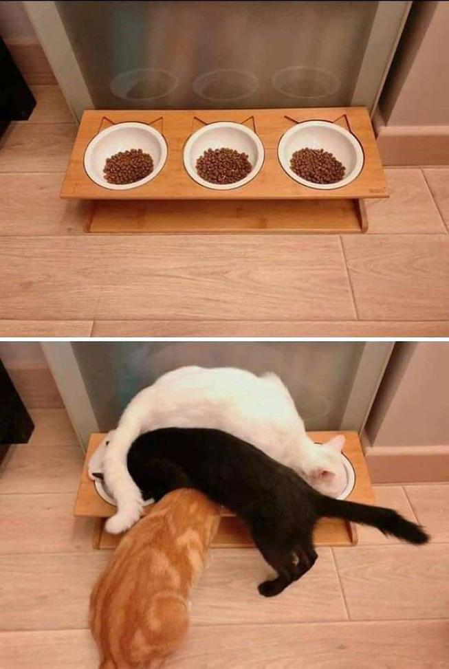 funny-cat-pics-posts-3-5c2a198ff1120__700