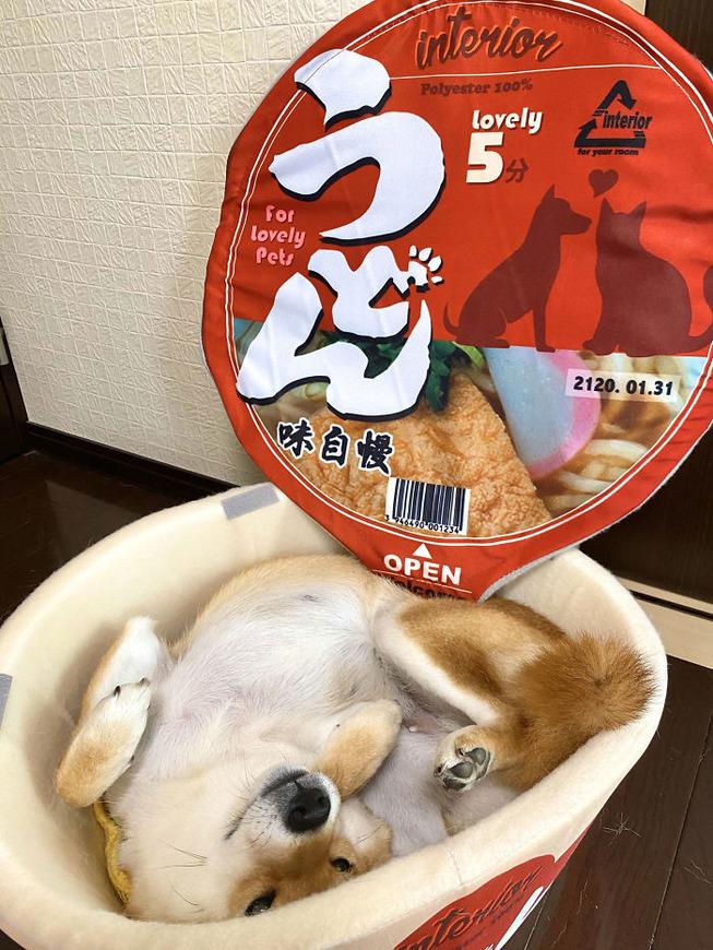 cup-noodle-bed-pet-4-5eb9479b5dbc5__700