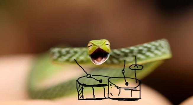 snake-with-hands2-5b8006d300dbb__700