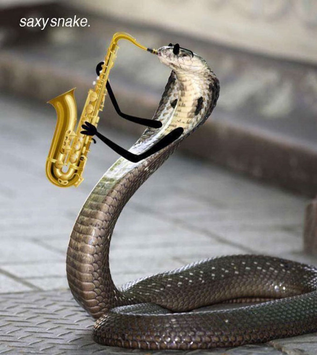 funny-snakes-arms-doodle-38-5d81e0dde0a11__700