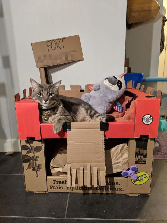 cats-cardboard-forts-205-5f2d1930d7eb9__700