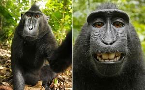 monkey-620_1937620e
