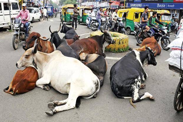 cows-kf8E--621x414@LiveMint