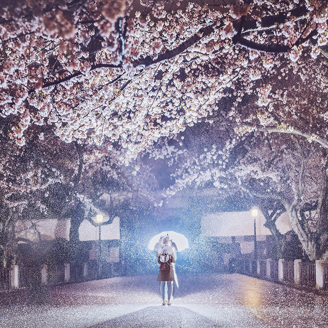 Lost-in-Kyoto-and-the-sakura-blossom-59101a741de1a__880