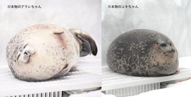 0031555_you-more-round-squishy-seal-awake