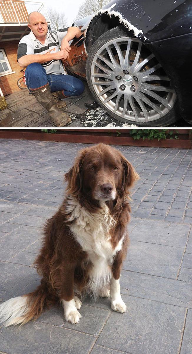 pets-destroying-things-10-6036557e5b398__700