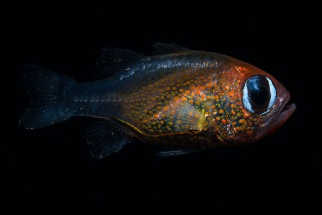 scientists-discovered-71-new-species-california-academy-sciences