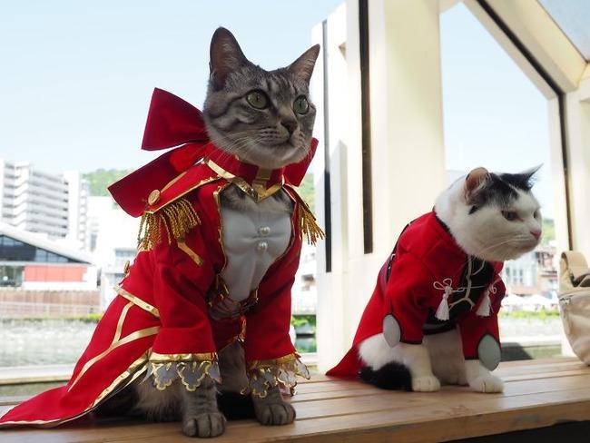 cats-anime-costumes-yagyouneko-japan-5f48f60db4525__700