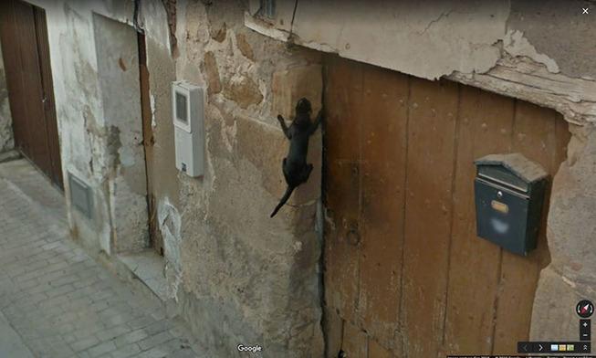 google-street-animals-57-5d244cde501b3__700