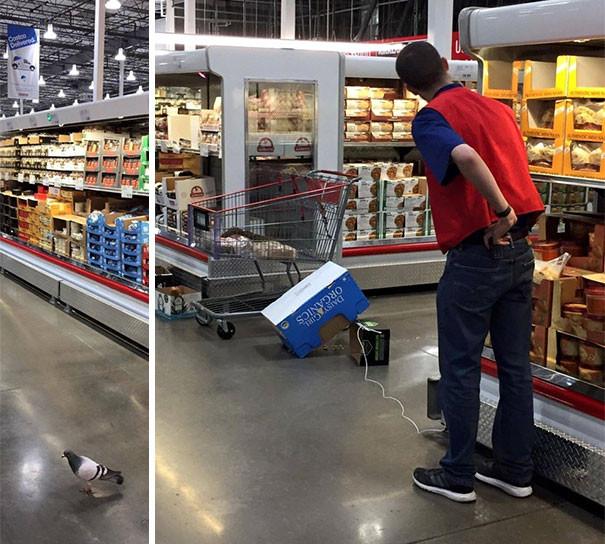 funny-supermarket-people-35-5b599021112fa__605