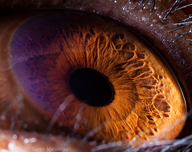 animal-eyes-photography-suren-manvelyan-21-5f4e1918b8bbb__700