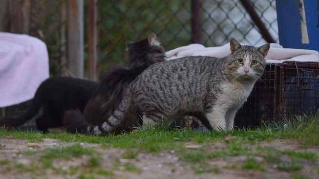 feral_cats_getty