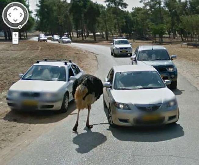google-street-animals-44-5d2445b3f24bf__700