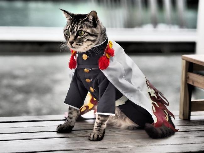 cats-anime-costumes-yagyouneko-japan-5f48efdff3176__700