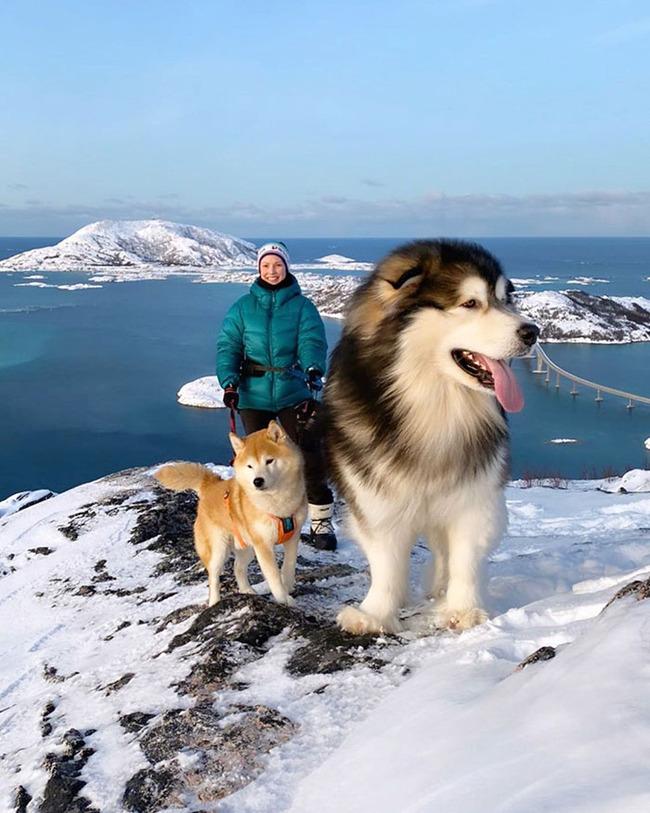 giant-dog-breeds-2-5fb79476a970f__700