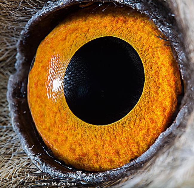 animal-eyes-photography-suren-manvelyan-6-5f4e18e5a9ed7__700