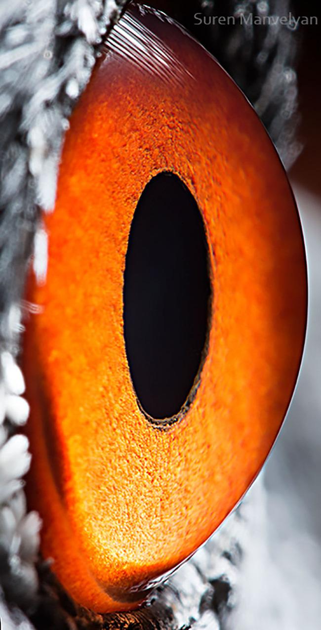 animal-eyes-photography-suren-manvelyan-18-5f4e190d130ad__700