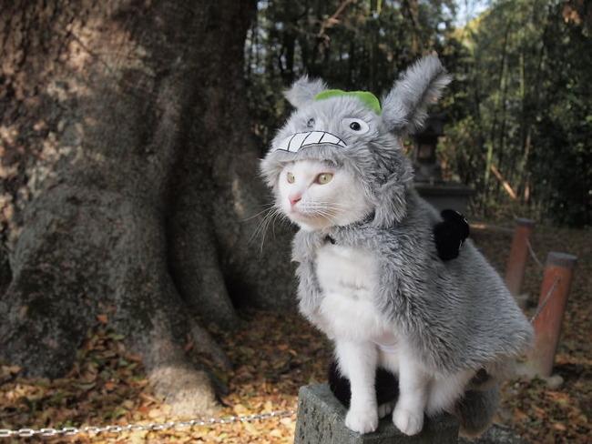 cats-anime-costumes-yagyouneko-2-5f48c153bf5f6__700
