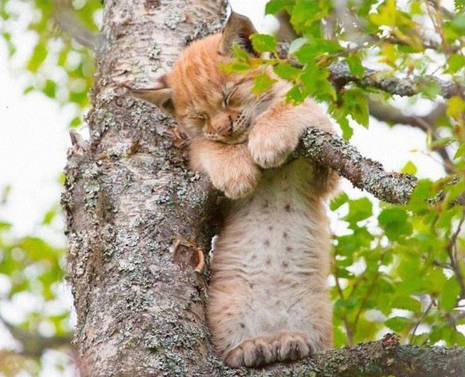sleeping-cats-in-trees-18-5f1188cc8cbd0__700
