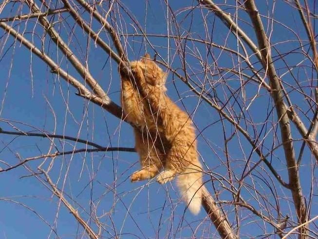sleeping-cats-in-trees-20-5f11908adde11__700