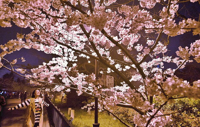 cherry-blossoms-spring-china-9-5ab2667a5d2fe__880