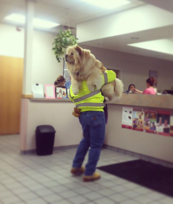 funny-dogs-vet-clinic-26-5a38caa0eb352__605