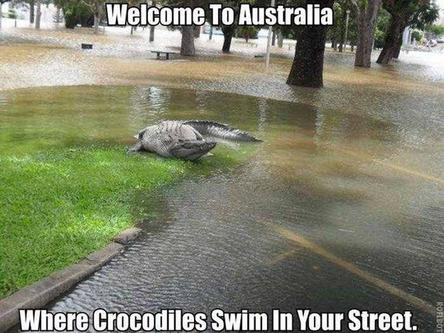 14 - 14 Seriously Crocodiles