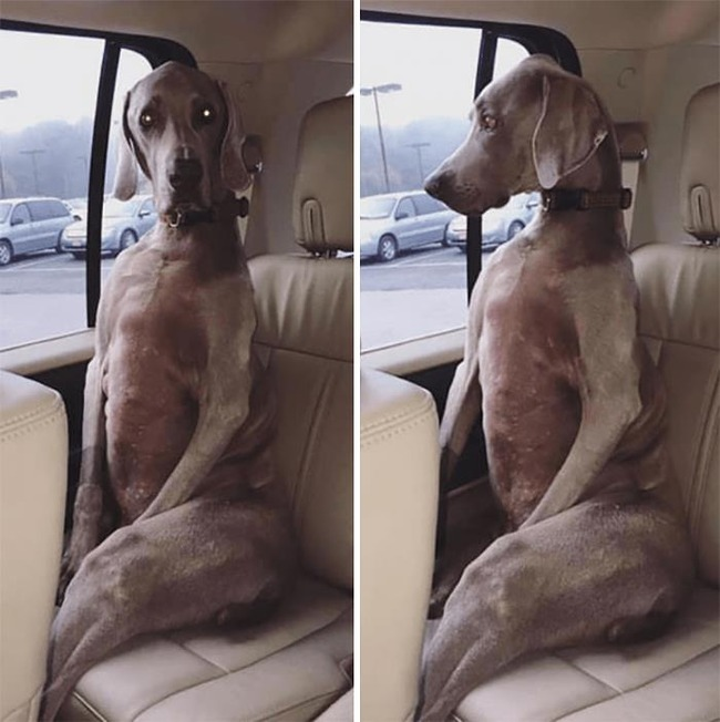 funny-dogs-riding-cars-pics-5f59f01472658__700