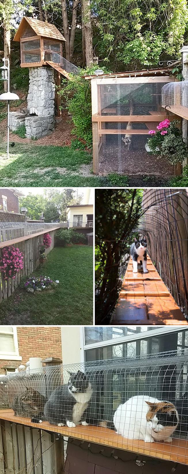 catios-cat-patios-outdoor-enclosures-42-5cf8ffae4dde1__700