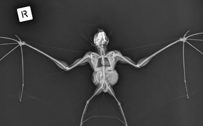 weird-interesting-funny-x-ray-pictures-55-5f58e4b1a0efe__700