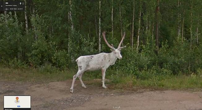google-street-animals-45-5d2445cd1605b__700
