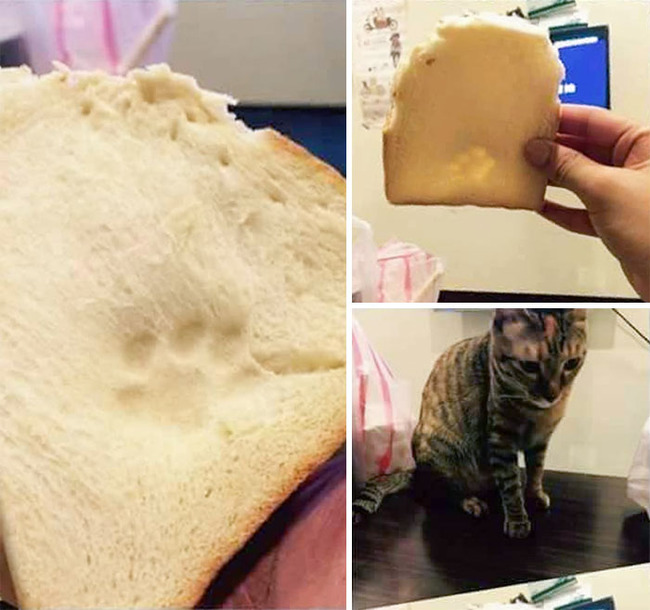 cats-dogs-stealing-food-41-5f4f412676326__700