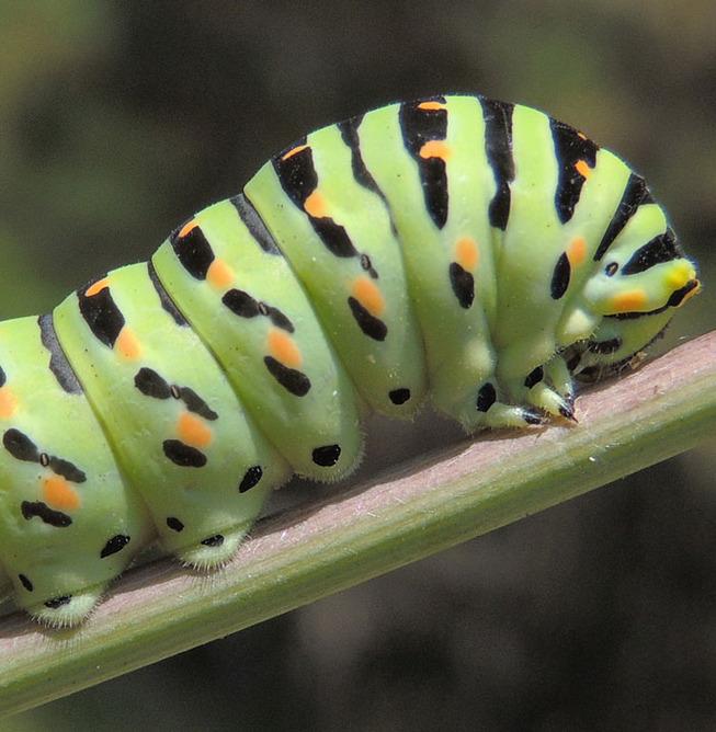 caterpillar-feets-5-5ef0be4b71682__700