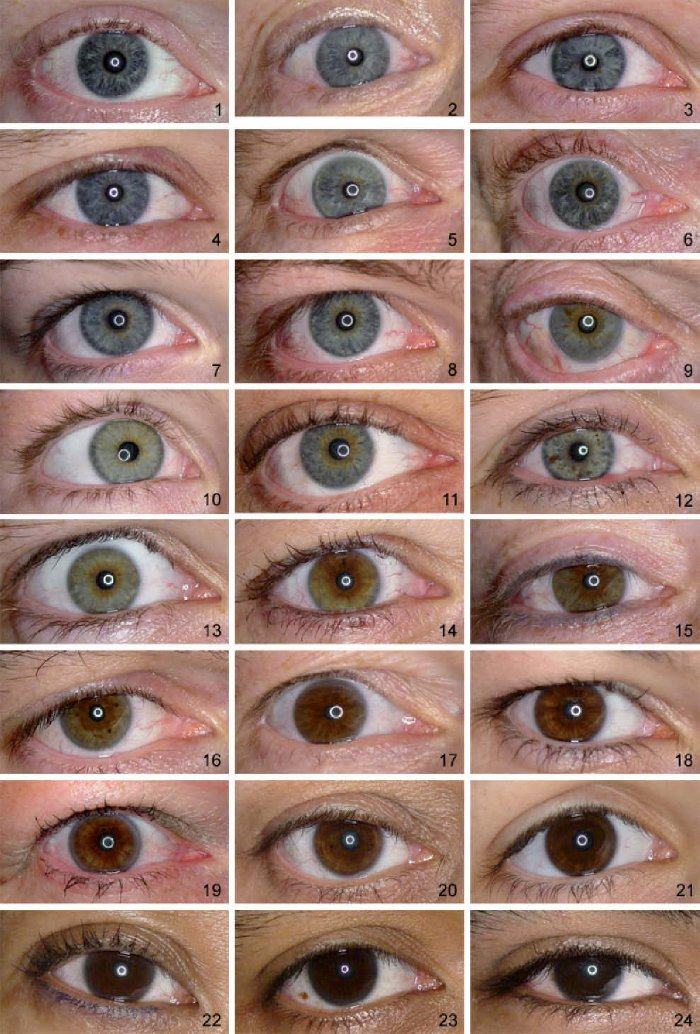 1414599426219 外国人「瞳の色を24種類に分類してみたんだけど、お前らの眼はどの色に