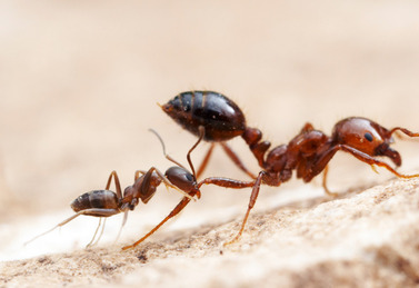 ants_2