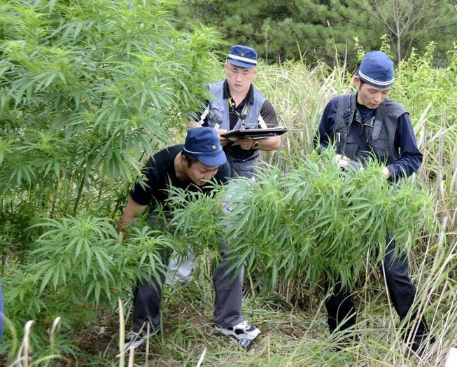 p14-mitchell-cannabis-b-20140420-870x698