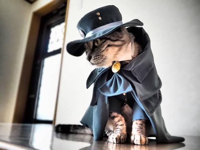 cats-anime-costumes-yagyouneko-4-5f48c162b0e41__700