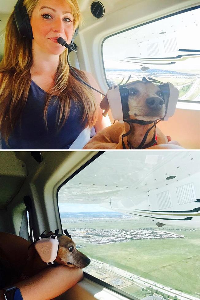traveling-animals-04-5fc4e8813576a__700
