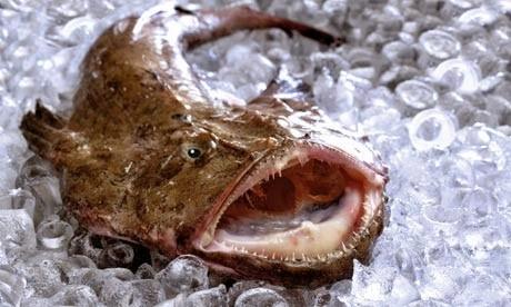 Monkfish-on-ice-009