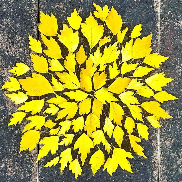 fallen-leaf-art-japan-13-585117de63dfa__700