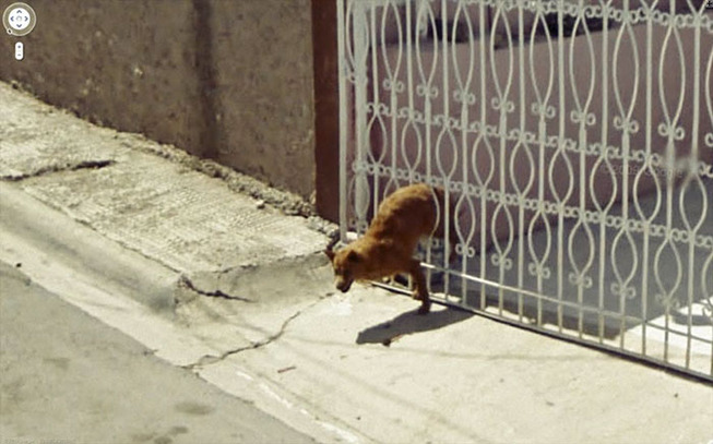 google-street-animals-5d2441cc590f9__700