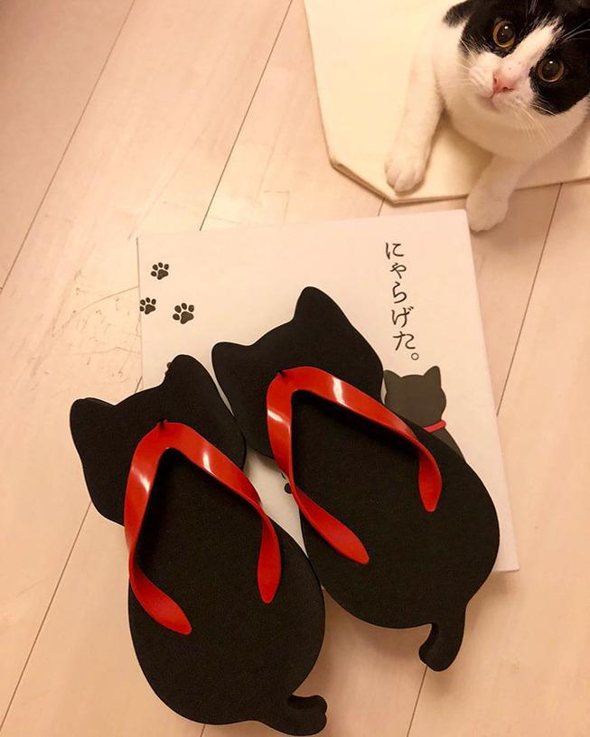 cat-shaped-slippers-nara-getaya-5d0b453a075e6__700 (1)
