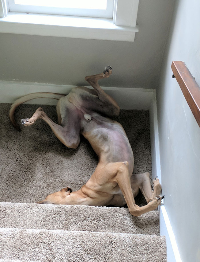 funny-dog-sleeping-positions-84-5d5f949c1a0a0__700
