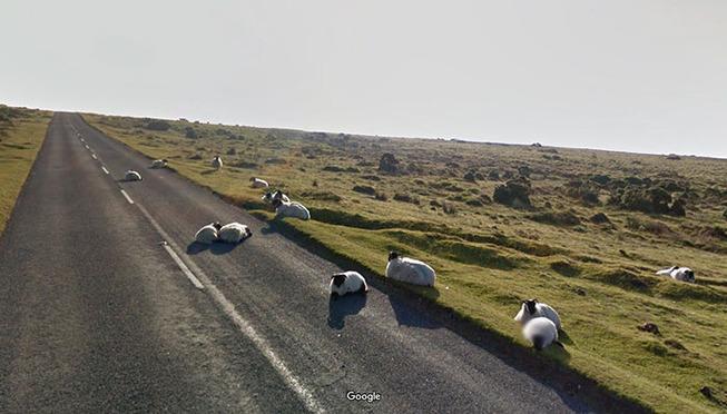 google-street-animals-5d2441e2d6c81__700