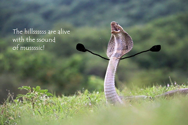 funny-snakes-arms-doodle-39-5d81e10b36778__700