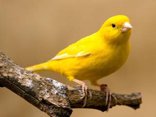 1322867162_canary-6