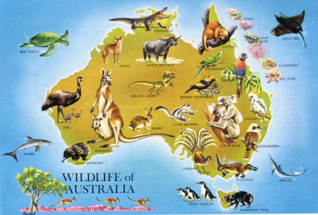 large_detailed_wildlife_map_of_australia